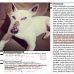 Poços de Caldas: Estúdio demite tatuador que fez tatuagem em cão