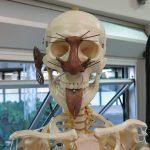 Belo Horizonte: Museu de Ciências Morfológicas recebe novamente exposição que discute as modificações corporais