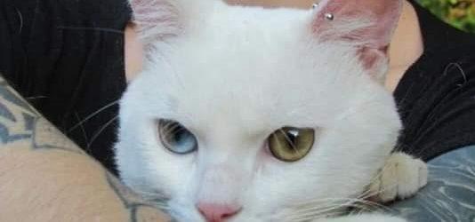 Osasco, 16 de Novembro de 2019 Cara body piercer, Recentemente chegou até nós que você colocou piercings nas orelhas do seu gato. Tomamos conhecimento do fato por meio da nota […]